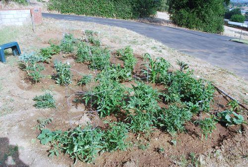 Garden photos 015