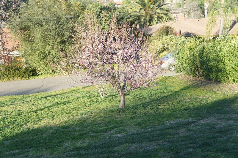 Garden andpeaches 060