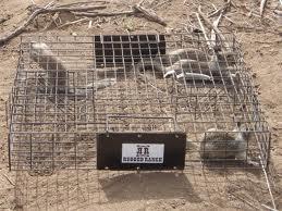 Squirrelnator trap