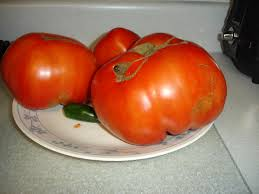 Dinner plate tomatoes