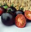 Indigo red tomato