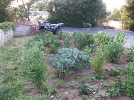 Good_garden_2